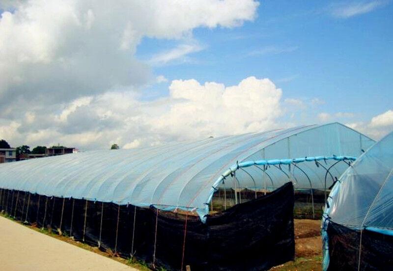 Invernadero Luz azul de plástico claro 5 año 5.5 mil Poli Film-Varios Largos