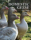 Domestic Geese by Chris Ashton (Paperback, 2010)