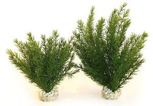 Sydeco Plantes Naturelles Club Mousse Grand 30cm (paquet De 4) 3502733501054