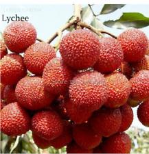 5 seeds Lychee Litchi chinensis Sonn Litchi chinensis Thailand rare item NEW