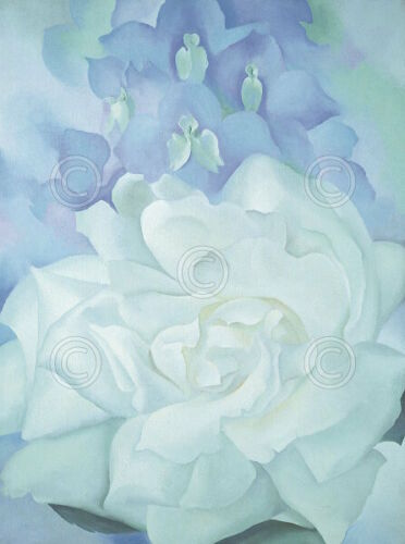 2 1927 Georgia O/'Keeffe Flower Print Poster 11x14 White Rose with Larkspur No