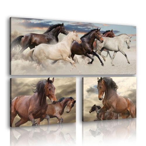 CANVAS Leinwand Wandbild Natur Pferd Tier Galopp Foto 3FX11224S16 3 teilig SET