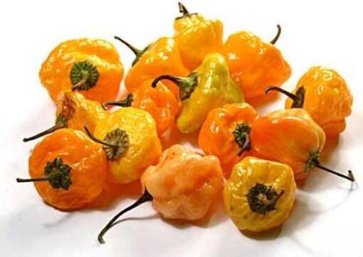 Scotch Bonnet Seeds, Orange, Heirloom Hot Pepper Seeds, Jamaican Peppers, 25ct