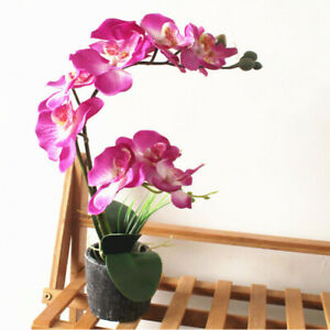 Artificial Simulation Silk Flower Butterfly Orchid Bonsai Fake Plants Cement Pot Ebay