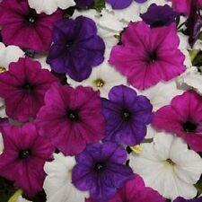 Easy Wave Great Lakes Mix Pelleted Petunia Seeds 25 Pelleted Seeds