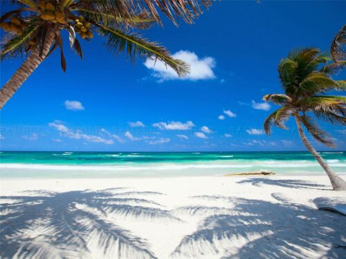 COCONUT PALMS AT DESOLATE BEACH CARIBBEAN PARADISE PHOTO PRINT POSTER BMP519A