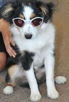 Doggles Dog Rubber Framed K9 Optix Sunglasses Silver Uv Lenses Eye Protection