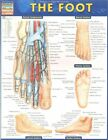 Foot 9781423224204 by BarCharts Inc Poster