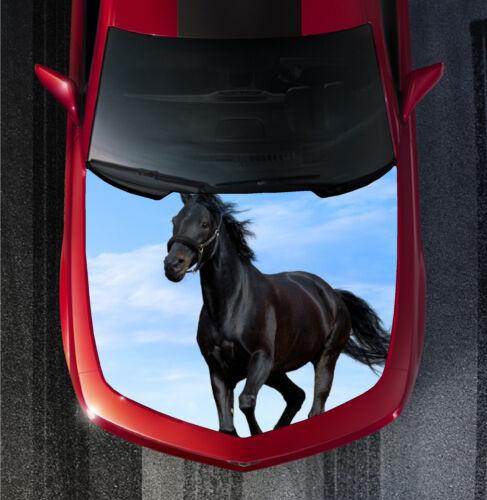 H106 HORSE HORSES Hood Wrap Wraps Decal Sticker Tint Vinyl Image Graphic