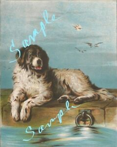 Pets Art Repro Made in U.S.A Giclee Prints Bernard Dog by Charles Barber St