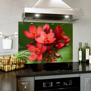 Efficace Splashback En Verre Cuisine Cuisinière Floral Tropical Asclépiade Fleur Toute Taille 0465-afficher Le Titre D'origine Dans La Douleur