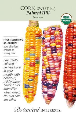 Organic Painted Hill Sweet Corn Seeds Botanical Interests 8 grams