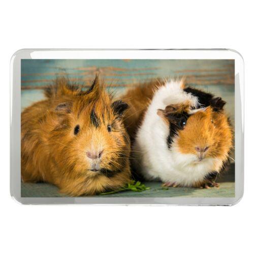 Funny Brown cobaye classique aimant de réfrigérateur-rongeur cochon animal cadeau #8477