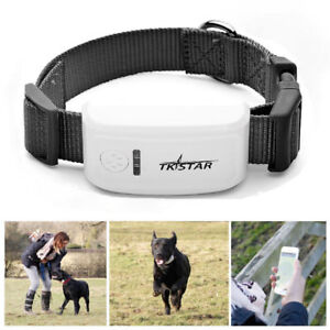Real-Time-Mini-Pet-Dog-Cat-GPS-GSM-Tracker-Collar-Locator-Tracking-Anti-lost
