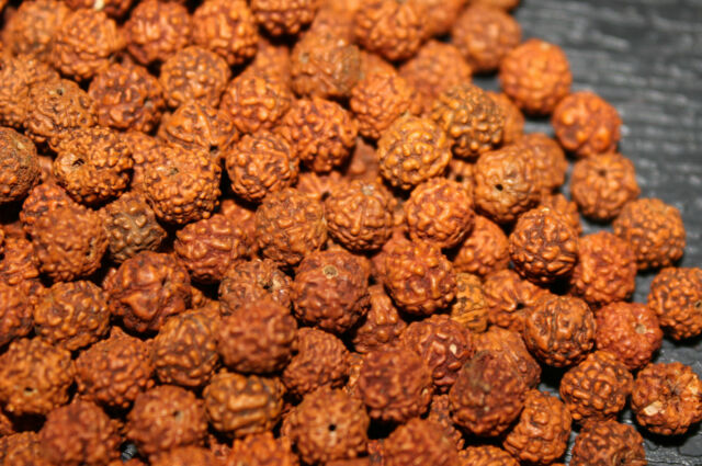 Loose Rudraksha Rudraksh 4 mm 5 MM 6 MM Beads Hindu Yoga Meditation Wholesale