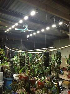 LED-5000k-Growing-light-green-house-vegetable-indoor-flower-plants-solar-panel