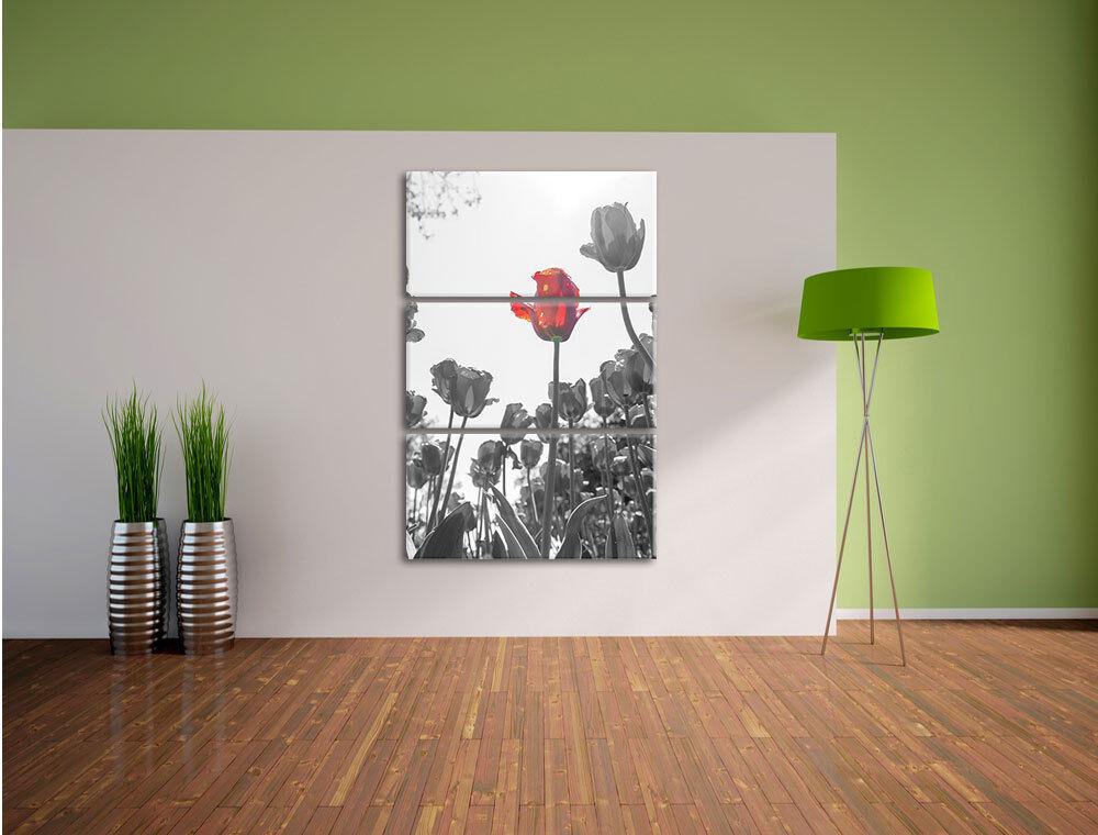 Tulpenfelod Aus Tiro de Ángulo bajo en 3-Teiler Foto en bajo Lienzo Decoración de Pa rojo  58a16b