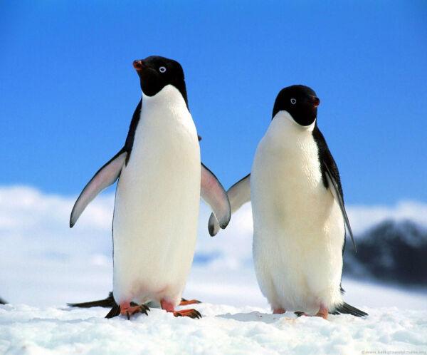 2 Penguins - New Fabric Mouse Mat Nieuwste Technologie