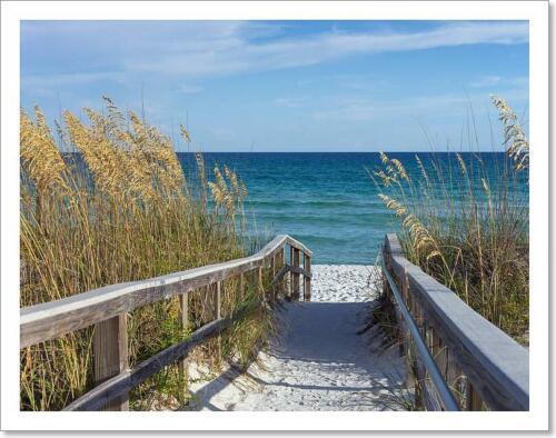 Beach Boardwalk With Dunes And Sea Oats Art Print Home Decor Wall Art Poster C