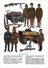 PLANCHE UNIFORMS PRINT WWII Armée Belge Belgique Belgian Army Belgium 1939-1940