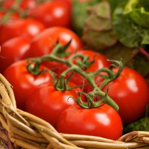 Tomato Ailsa Graig x25 seeds Vegetable Seed