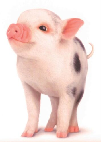 PIG PIGLET CUTE PICTURE POSTER PRINT AMK167