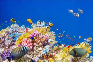 Great Barrier Reef Under Sea Full Wall Mural Photo Wallpaper Print