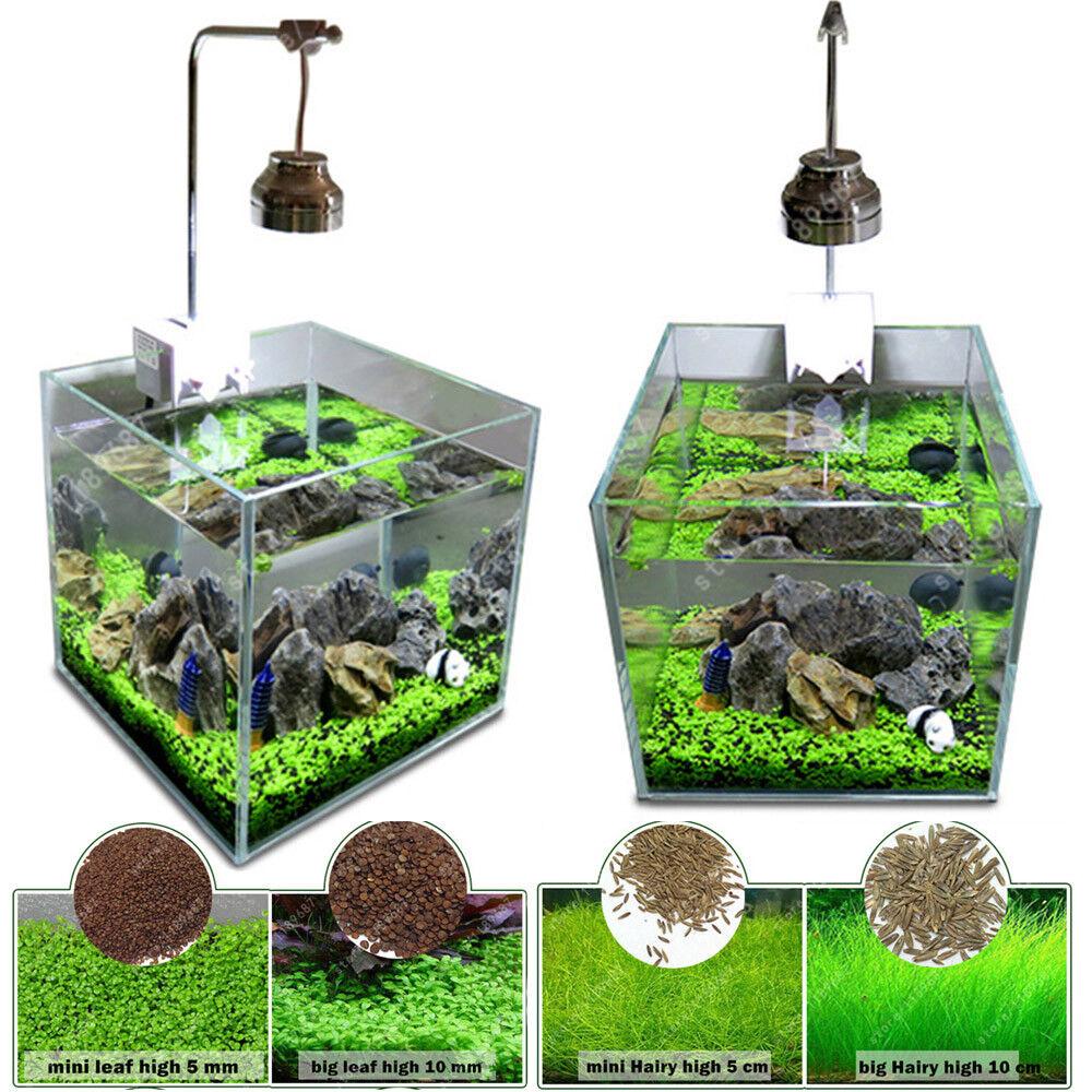 Details about 5X Bag Aquarium Plant Seed Water Plant Grass Leaf Fish Tank  Decoration Live