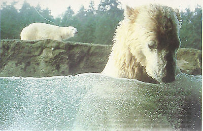 Polar Bears  Point Defiance Park  Zoo /& Aquarium   Tacoma WA   Unused  Postcard