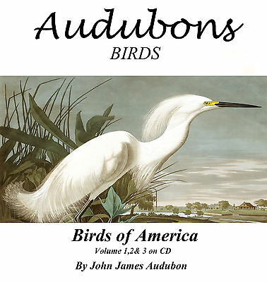 Antique Vintage  Birds of America Audubon Illustrations Art  Prints  on CD