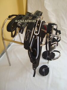 with designer white piepin bridle. Black Synthetic patent Nylon Driving harness