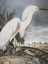 Audubon - Snowy Heron or White Egret - Birds of America - Ariel Press FOLIO