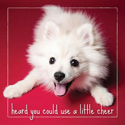 - DS-C-HB-1873-008 Pomeranian Dog Studio Birthday Card HAPPY BIRTHDAY