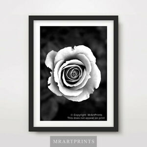 e6627ce5d BLACK & WHITE ROSE Art Print Poster A4 A3 A2 Floral Flowers ...