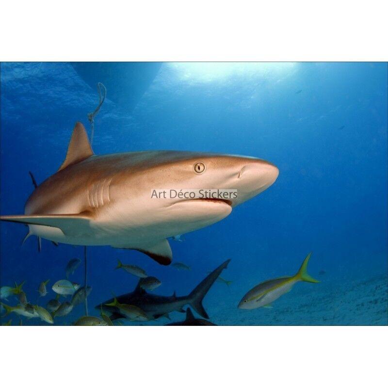 Stickers muraux géant déco : Requin 1544   Au Premier Premier Premier Rang Parmi Les Produits Similaires  5c929e