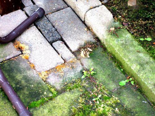 Pierre nettoyant concentré 5 L Pierre algues