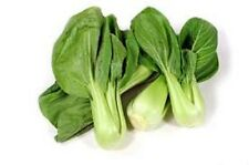2000x Bok Choy Pak Choi Shanghai Qing White Cabbage Vegetable Seeds Plant