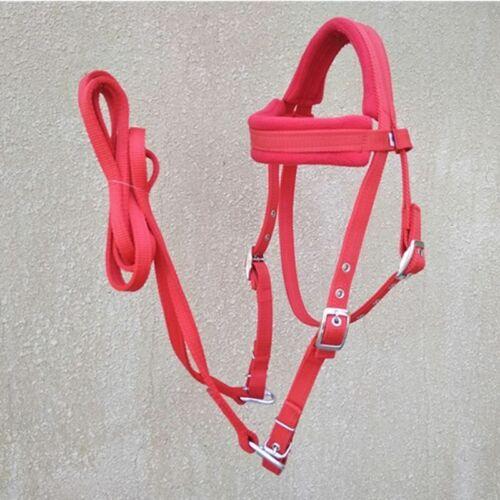 Adjustable Horses Bridle Rein Metal Buckle Pp Webbing Halter Horse Equipment
