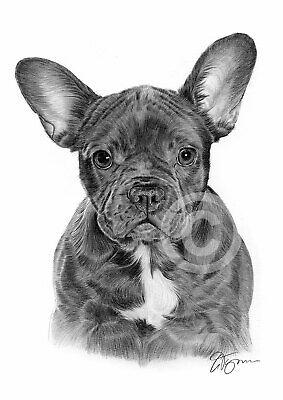 Yard Dog Homme T-shirt imprimé bull dog Chaîne Animal Pet