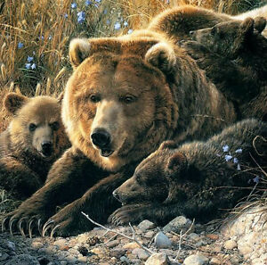 detail by Carl Brenders Wildlife Cubs Poster 11x14 BEAR ART PRINT Close to Mom