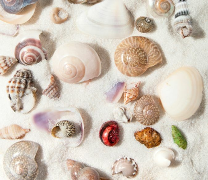 3D Beautiful Shell Sand Floor WallPaper Murals Wall Print Decal 5D AJ WALLPAPER