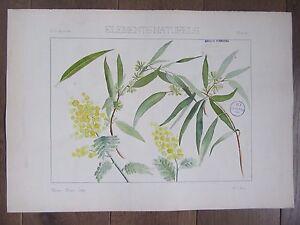 Dessin Original Aquarelle Arts Decoratifs 1896 Branches Fleurs