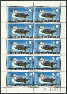 Senegal-Oiseau-Canard-a-Bosse-Knob-Billed-Duck-Bird-Hockerglanzgans-Vogel-1968