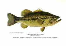 1940's Vintage Fish Art Print ~ Large-mouthed Black Bass