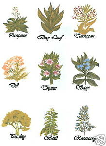 HERBS-WALL-DECAL-WALL-ART-TRANSFERS-CREATIVE-ART-TRANSFERS-TATOUAGE