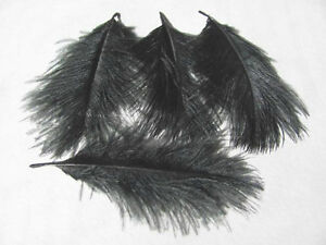 Grey Ostrich Spey Plume Feathers