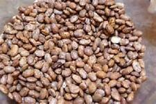 1/4 lb Pinto bean seed   new seed for 2017 Non-Gmo,Heirloom Seeds