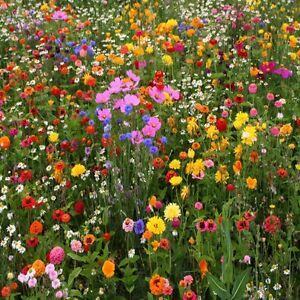 wildflower wallpaper uk