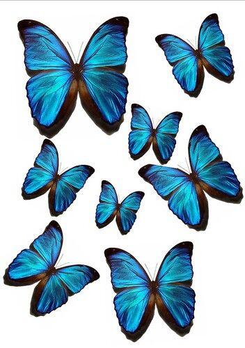 56 X vivd Azul Comestibles Mariposas Ideal 4 Boda Cumpleaños Cake Toppers wb6