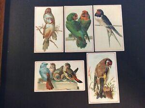 Vintage Arbuckle's Ariosa Coffee Co. 1880-1890's Trade Cards Lot of 5 Birds